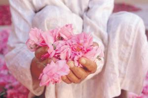 Kelâat M'gouna: Du festival aux premiers pas de l'industrialisation de la rose