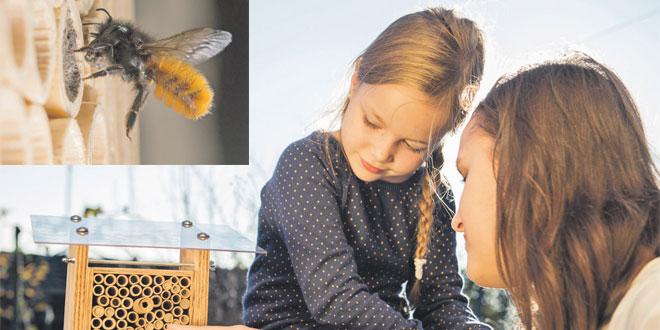 Des abeilles sauvages à la maison