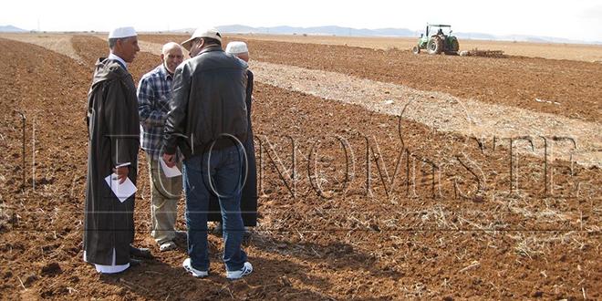 Agriculture : Les investisseurs plébiscitent le Maroc