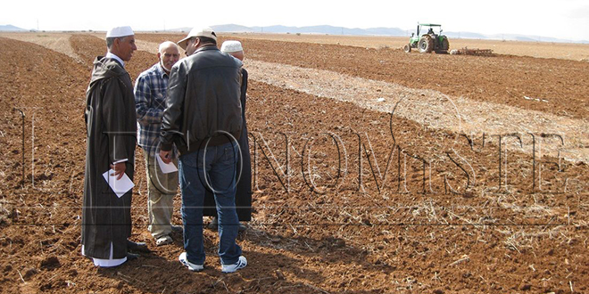 Agriculture solidaire : De grandes avancées dans l'Oriental