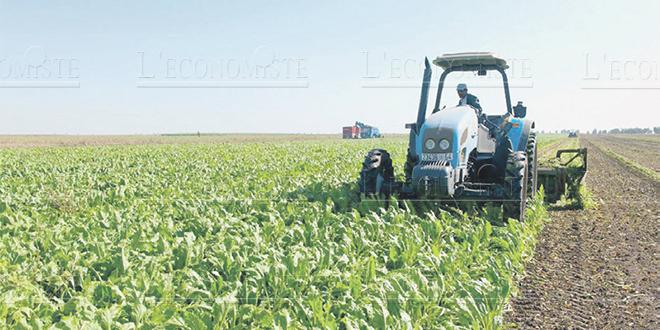 """""""Bonne campagne agricole"""" pour la région Marrakech-Safi"""
