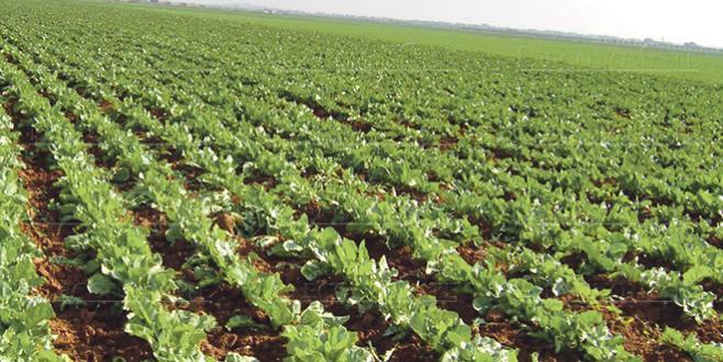 Agriculture : Près de 100 milliards de DH investis en 10 ans