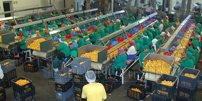 Agroalimentaire: Exportations marocaines de 2 MT à l'UE