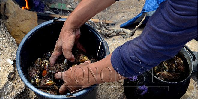 Aquaculture en Méditerranée : Le Maroc très en retard