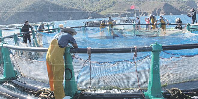 Les entreprises aquacoles tiennent leur forum à Dakhla