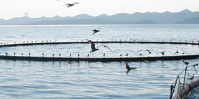 Souss-Massa: 38 millions de DH pour booster l'aquaculture