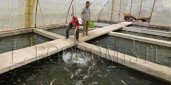 Aquaculture: Une loi cadre en gestation