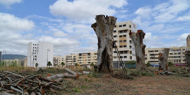Fès: Des arbres de 100 ans abattus, les riverains s'insurgent!