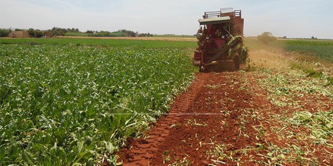 Agriculture: Hausse des 56,8% des subventions au Gharb