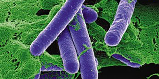 Intoxication : Comment agit la bactérie mortelle?
