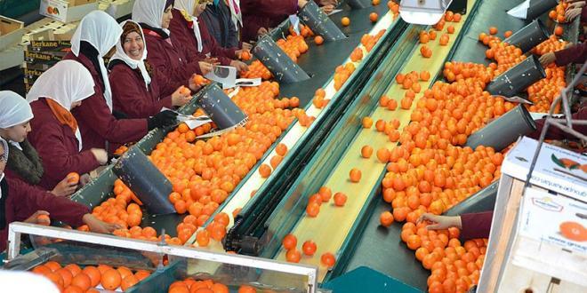 Taroudant : Une Z.I. dédiée à l'agro-industrie
