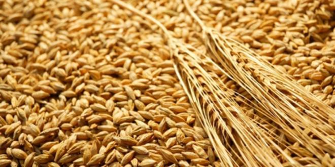 Import : augmentation à 135% des droits de douane du blé tendre