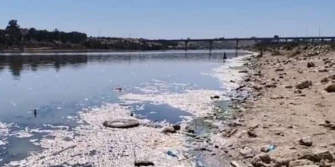 Oum Errabia: Dragage du sable de l'embouchure après la mort de milliers de poissons