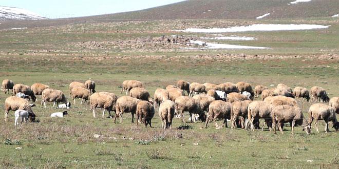 Alimentation du cheptel: Plus 167.000 éleveurs soutenus