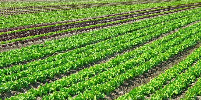Produits maraîchers: La région de Rabat sécurise son approvisionnement