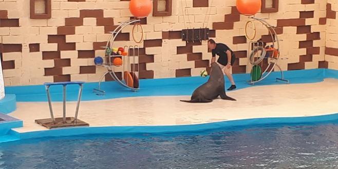 VIDEO/ Le show des dauphins à Agadir