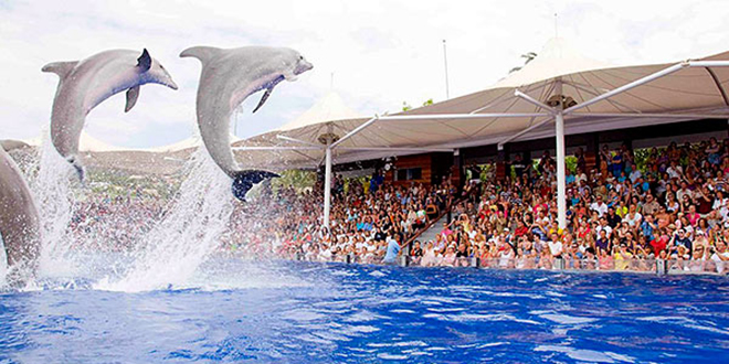 Enfin, un delphinarium au Maroc
