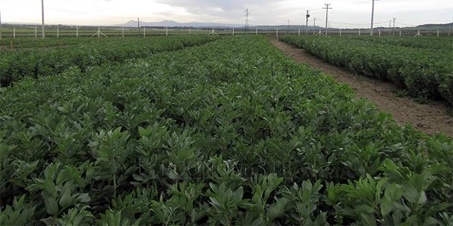 Technologies agricoles: L'INRA sensibilise les professionnels de Moulay Yacoub