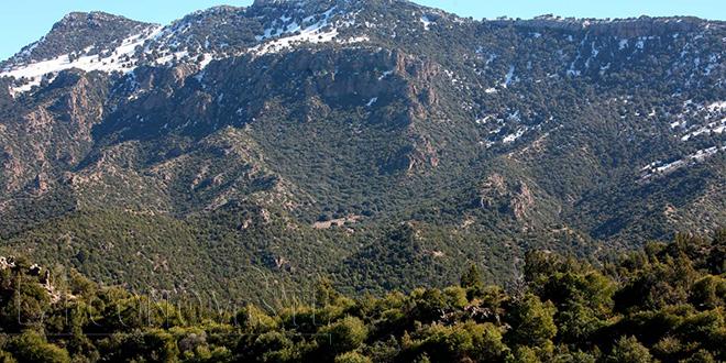 Le Maroc fête ses 9 millions d'hectares de forêts