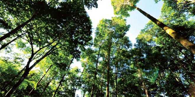 L'Entreprise comme la Nature:Un pas conscient vers le développement durable Par Navi Radjou