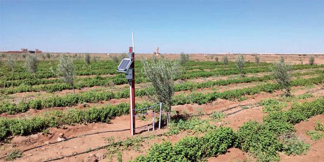 Essaouira /Agriculture: L'IA pour réduire la facture d'eau