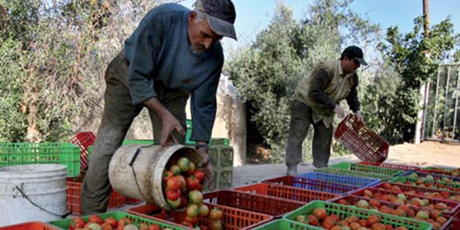 Produits agricoles : Les importations doublent les exportations