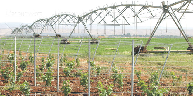 Fès-Meknès: 7,2 milliards de DH pour doper l'agriculture