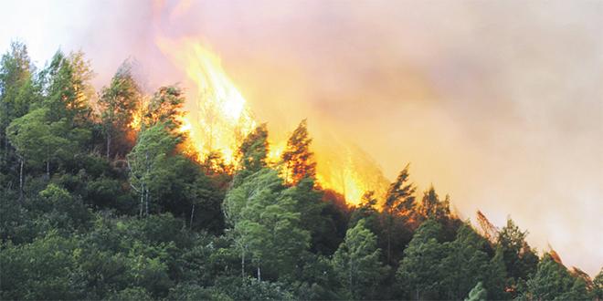Tanger : Les feux de forêt de retour