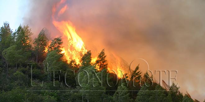 Chichaoua : L'incendie de la forêt Ouirman maîtrisé à temps