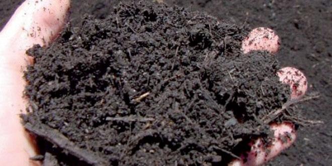 Horticulture: La Douane taxe la tourbe à 20%