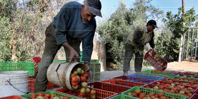 Importations de produits agricoles : Les reliquats répartis