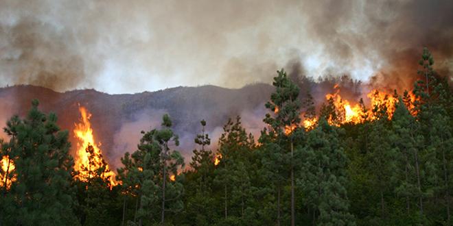 Les incendies de forêt baissent de moitié