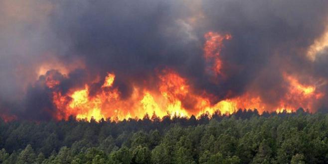M'diq-Fnideq: Plus 1.000 ha de forêts partent en fumée
