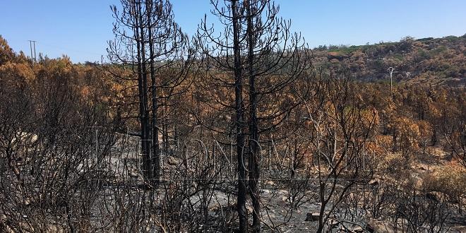 Chefchaouen : 100 hectares de forêt décimés par le feu