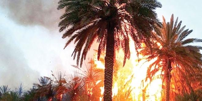 Guelmim : Plus de 800 palmiers ravagés par le feu