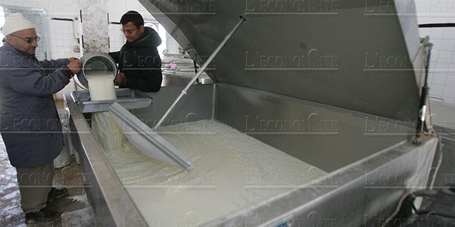 Le HCP analyse la filière laitière
