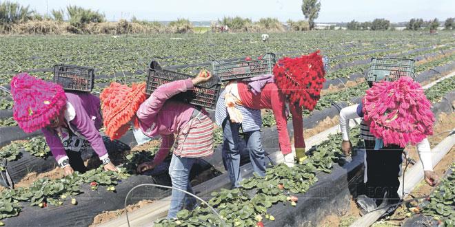 Huelva: Le Maroc réclame un meilleur traitement des saisonnières