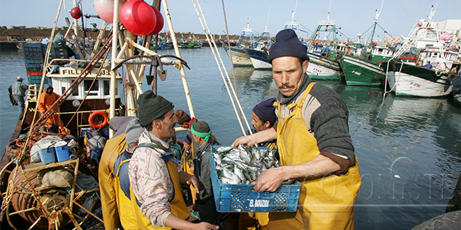 Tan-Tan/ Marché de gros: Hausse de 25% de la quantité de poisson commercialisée