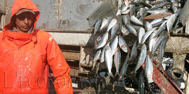 Agadir Haliopole Cluster forme sur le e-commerce des produits de la pêche