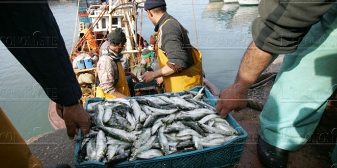 Pêche: Hausse des débarquements dans les ports de la Méditerranée