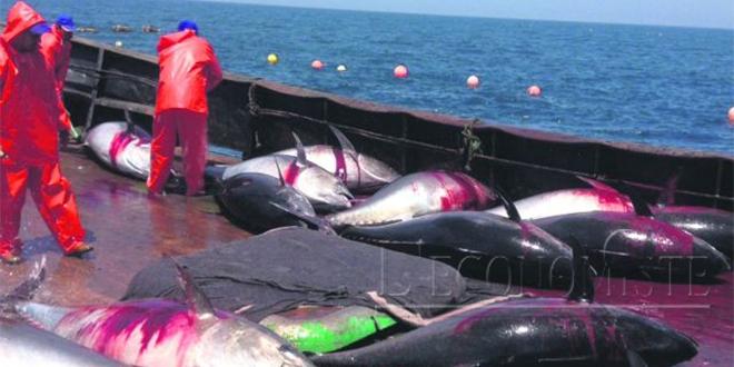 Pêche : Les captures baissent, pas les recettes
