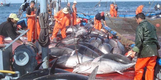 Pêche: La FAO appelle à préserver les stocks