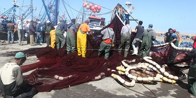 Port d'Essaouira: Grand bond des débarquements