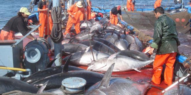 Pêche: Les prises progressent, pas la valeur
