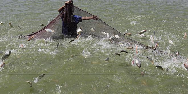 Pisciculture : Lhafi dévoile les objectifs