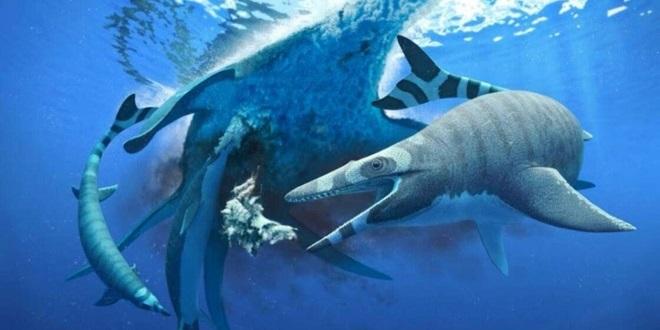 Nouvelle découverte de lézard marin au Maroc