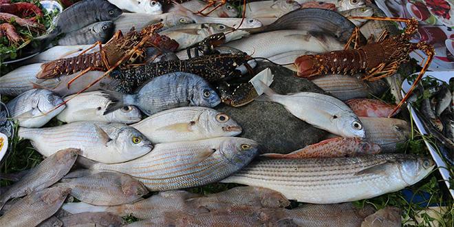 Le Brésil veut exporter son poisson au Maroc
