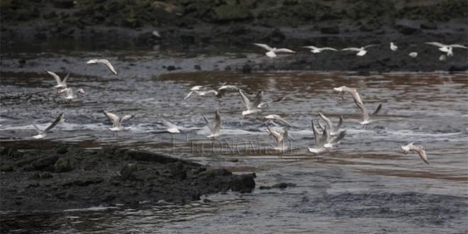 Pollution du Bouregreg : Les élus de la FGD contestent le rejet du lixiviat en mer