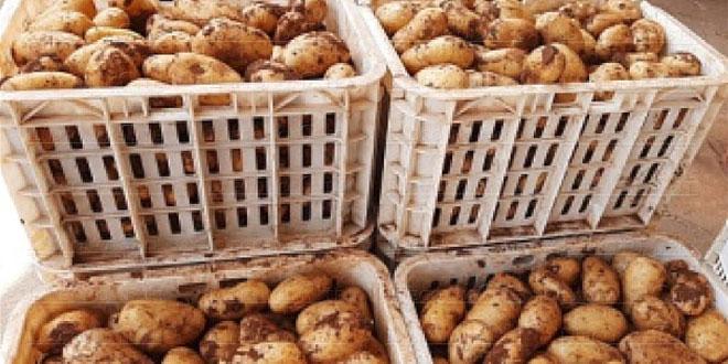 Oriental/Pommes de terre: Une saison exceptionnelle… mais menacée