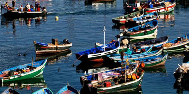 Pêche: Baisse des débarquements à Tan-Tan